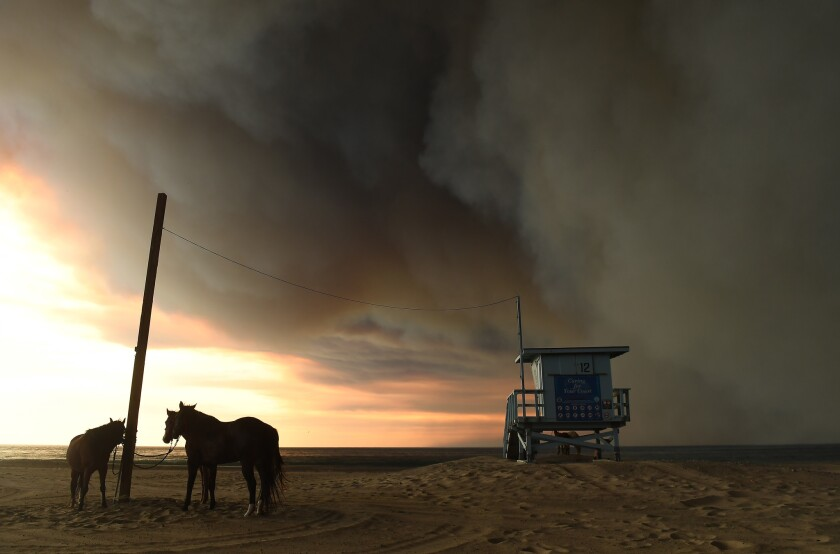 Horses are tied to a pole on the beach in Malibu as the Woolsey fire approaches.