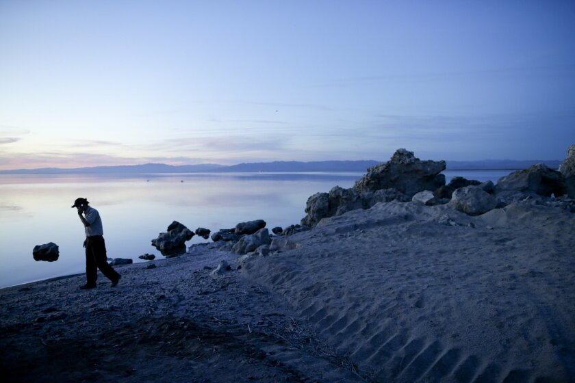 """In this April 29, 2015, photo, biologist Tom Anderson of the Sonny Bono Salton Sea National Refuge Complex makes a call along the receding banks of the Salton Sea near Niland, Calif. Often called the """"The Accidental Sea,"""" because it was created when the Colorado River breached a dike in 1905, Salto"""