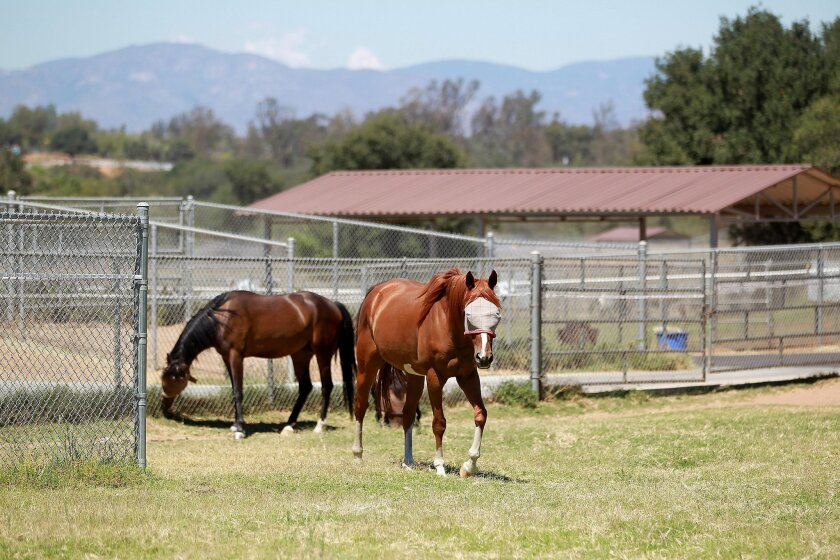 Blue Apple Ranch, run by the Toby Wells Foundation, provides equestrian/horsemanship camps year-round to thousands of children, including hundreds of foster kids, disadvantaged youth, etc. It's a 277-acre camp with nearly 100 rescue horses.
