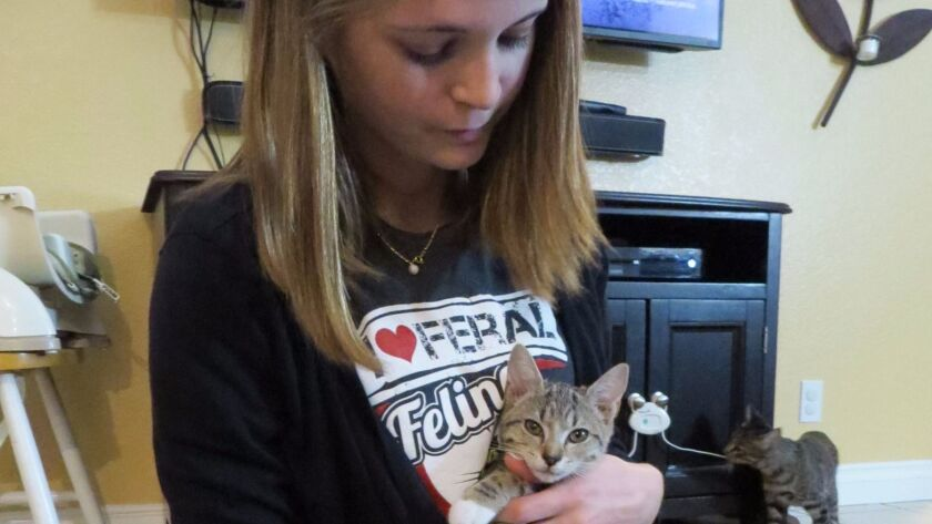 Melissa Dunaj, senior director for the Love Your Feral Felines rescue organization, cuddles Tinkerbe