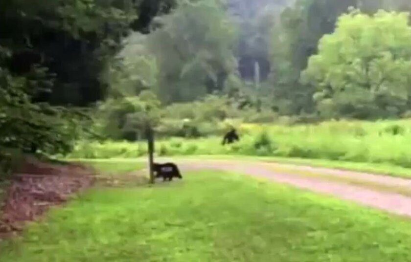 This image taken from a YouTube video shows the a strange figure walking into a North Carolina forest.