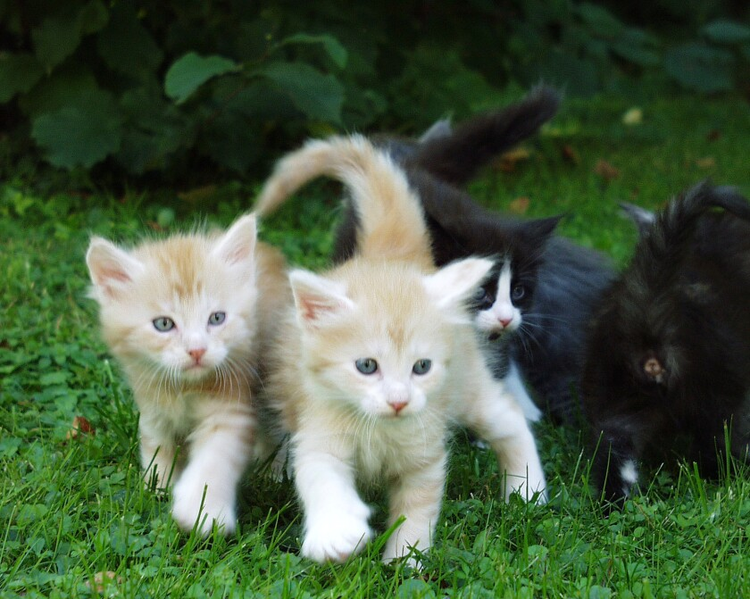 DogVacay launches new service for cat owners who need pet sitters