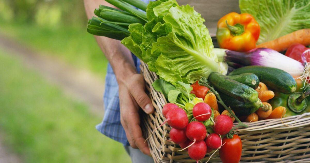 Gardening: Hard and easy vegetables to grow - Pomerado News