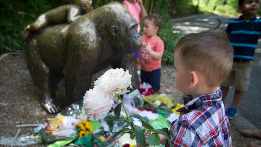 Gorilla exhibit at the Cincinnati Zoo