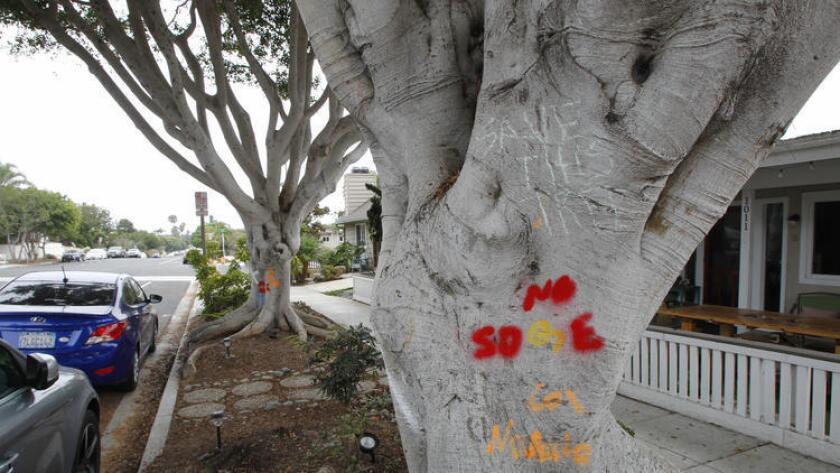 Encinitas trees