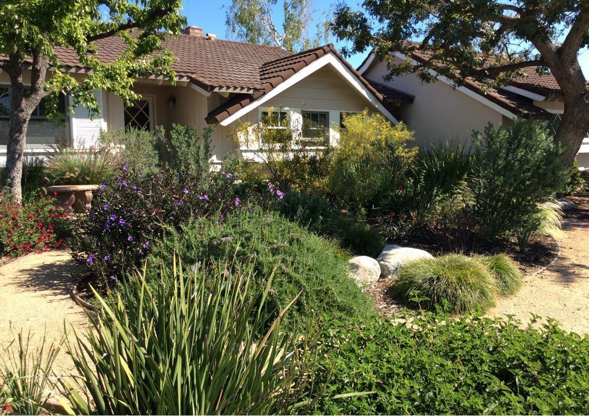 David Ramirez removed his front lawn and replaced it with drought-tolerant plants that attract birds and butterflies.