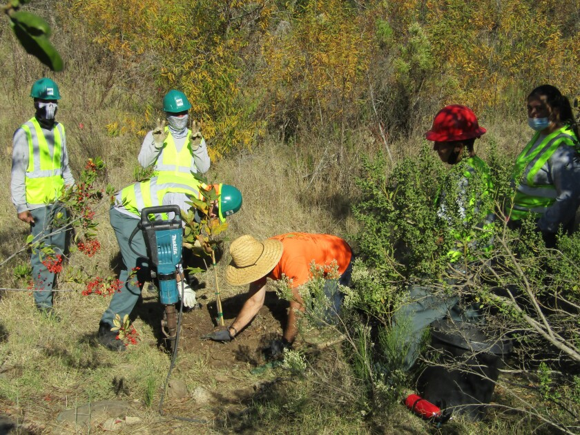 Urban Corps members planting trees