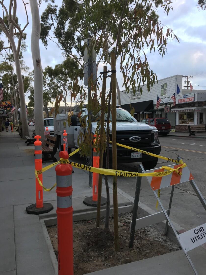 New tree on Marine Avenue