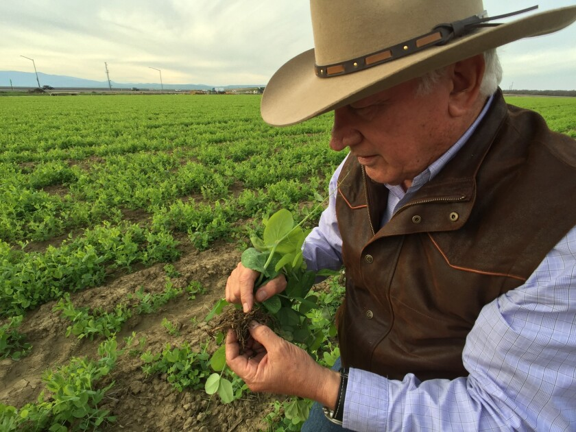 In the Central Valley, drought fears ease, but farmers