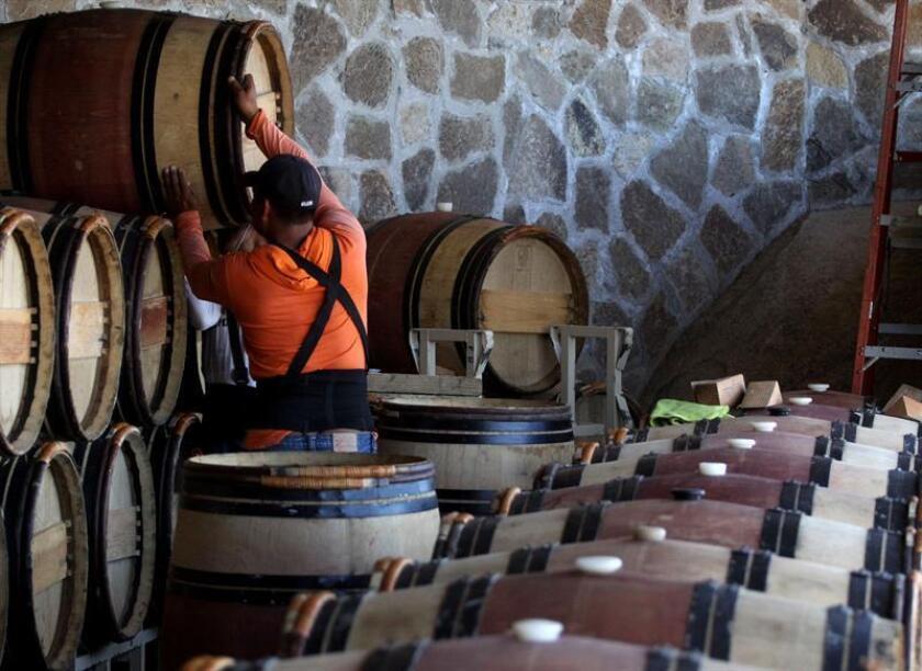Fotografía del 1 de junio de 2018 que muestra a un hombre mientras trabaja en un viñedo en Valle de Guadalupe, en el estado de Baja California (México). EFE