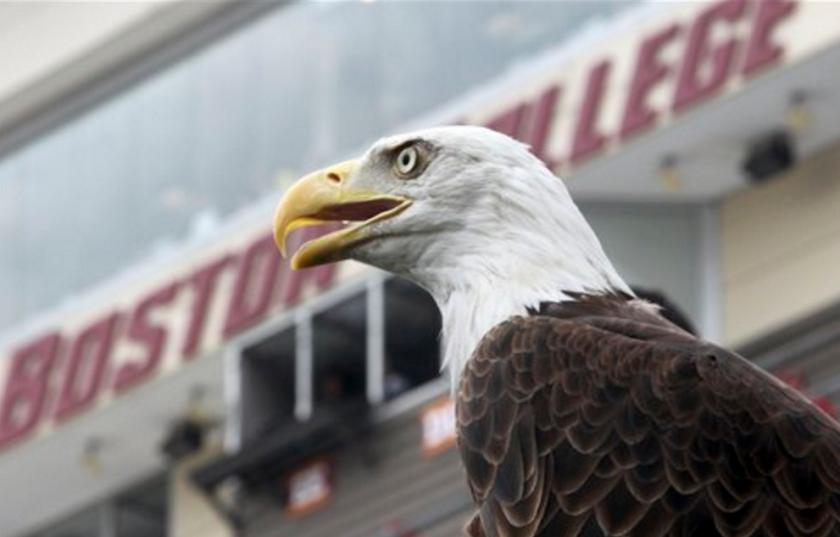ARCHIVO - En esta foto de archivo del 31 de agosto de 2013, un águila calvacontempla el campo de juego de un partido de fútbol americano universitario en Boston, En 2015 la población de la majestuosa ave alcanzó una cifra récord desde su reintroducción en Nueva Inglaterra en 1982. (AP Foto/Mary Schwalm)
