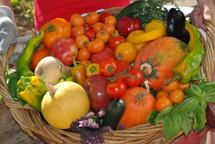 Harvested  vegetables in a basket