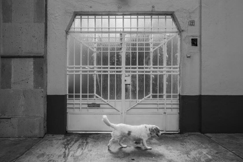 MEXICO CITY, FEDERAL DISTRICT -- MONDAY, DECEMBER 17, 2018: Exterior photos where Alfonso Cuaron sho
