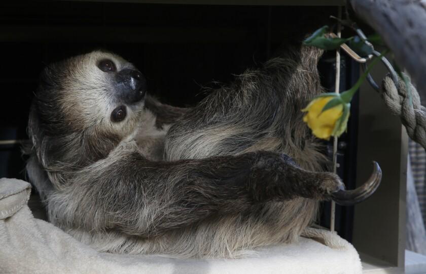 Virus Outbreak Zoos Engagement