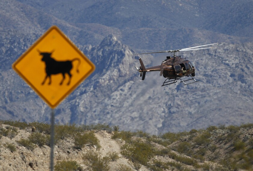 A helicopter takes off from a staging area near Bunkerville, Nev., for a Bureau of Land Management roundup of cattle owned by a local rancher.