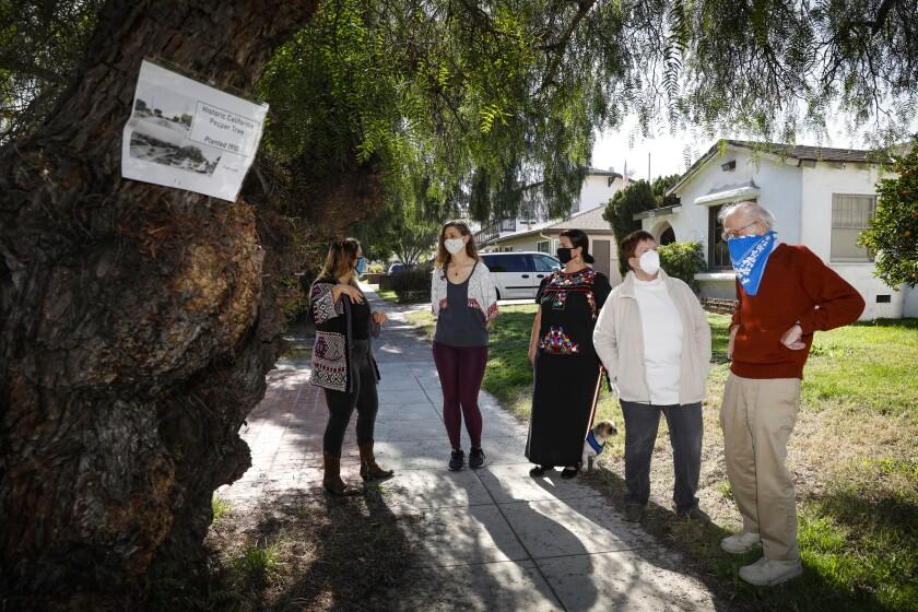 Five Kensington residents talk near one of three endangered pepper trees in the 4700 block of Marlborough Drive