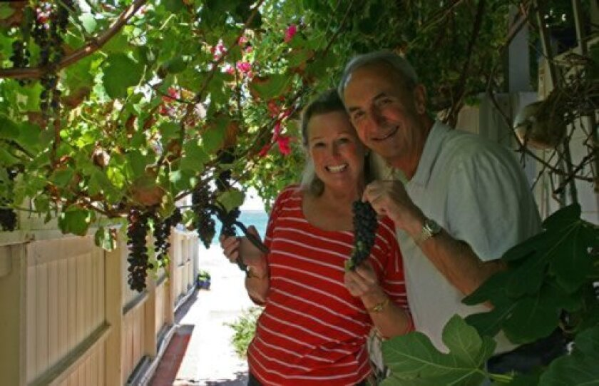 Cynthia Bond and Rob Whittemore gather grapes from their vines.
