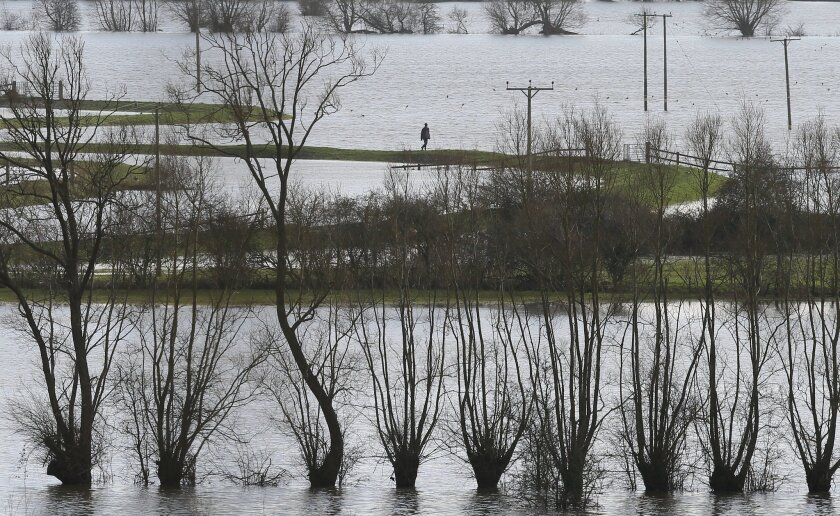 In this photo taken Sunday Feb. 2, 2014, a man walks along the raised banks of the flooded River Parrett near Muchelney in Somerset, England, the village has been cut off by road since Jan. 1 this year. Here on the Somerset Levels _ a flat, marshy region of farmland dotted with villages and scored by rivers and ditches _ it's often wet. But not this wet. Thousands of acres of this corner of southwest England have been under water for weeks, some villages have been cut off for more than a month, and local people forced to take boats to get to school, work and shops are frustrated and angry. Some blame government budget cuts and environmental bureaucracy. Others point to climate change. Even plump, endangered water voles are the target of ire.(AP Photo/Alastair Grant)