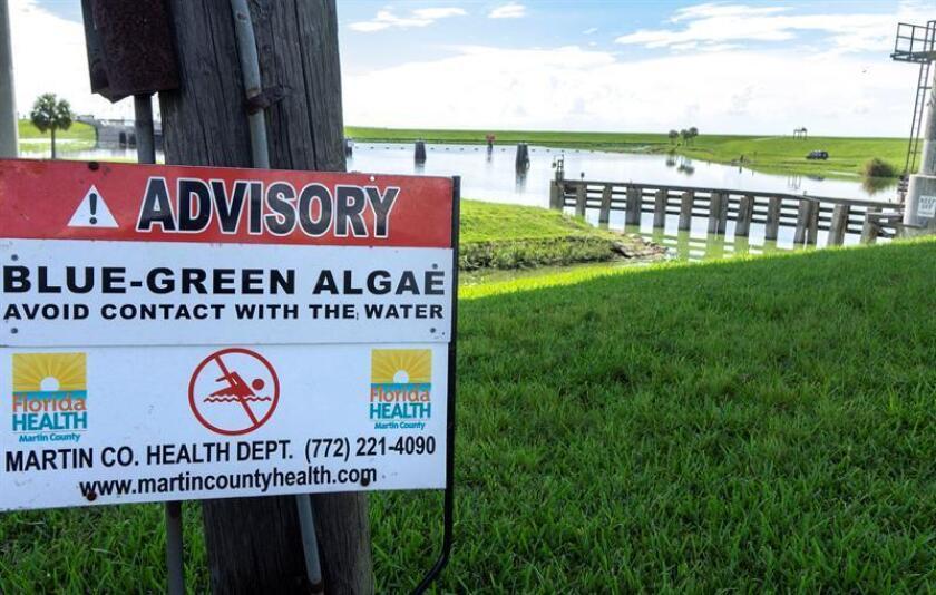 Vista de un letrero de advertencia sobre las algas verdeazuladas cerca de la esclusa y presa de Port Mayaca, en el lado este del lago Okeechobee en Canal Point, Florida, (EE.UU.) hoy, jueves 12 de julio de 2018. EFE