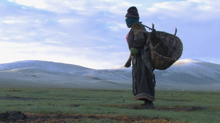"""""""Summer Pasture"""" explores the disappearing world of yak herders."""