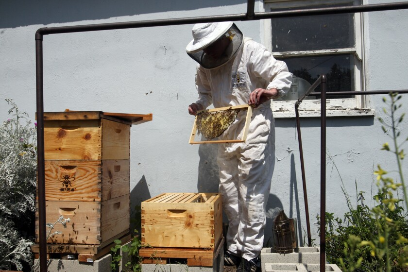 Rob McFarland holds a beehive of honeybees.