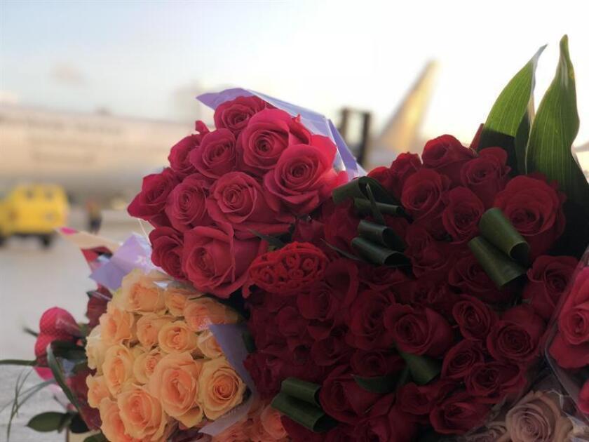 Fotografía cedida por UPS tomada hoy, lunes 12 de febrero de 2018, donde se muestran unos ramos de rosas, transportados por la compañía de envíos UPS, al arribar al aeropuerto de Miami (Estados Unidos). EFE/UPS/SOLO USO EDITORIAL/NO VENTAS