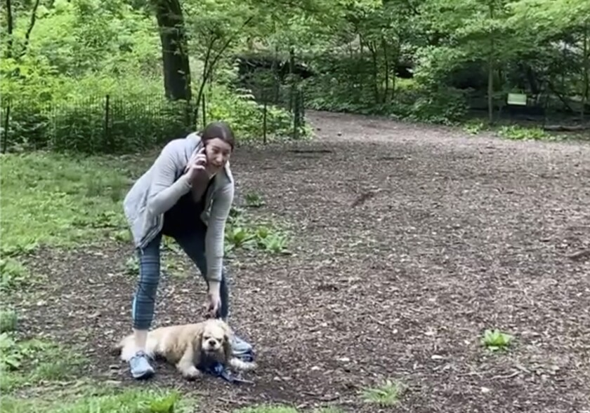 Amy Cooper with her dog calling police at Central Park in New York