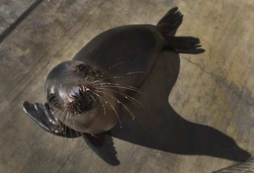 Center: Surge of sea lions leads to state of emergency