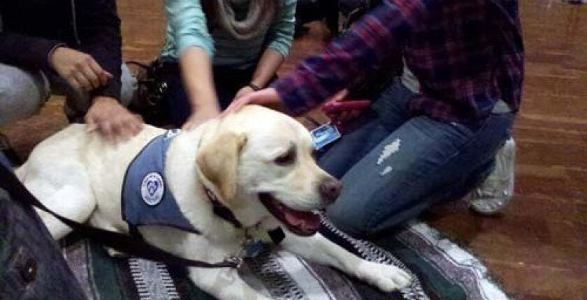 Archie, a white Labrador, was a popular 'petter.' Photo: UCSD/Christine E. Clark