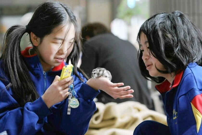 Sisters play with a hamster at a shelter in Tagajo, in Miyagi prefecture, where about 550 have been living since the March 11 earthquake and tsunami.