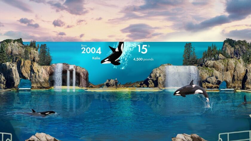 Rendering of planned backdrop for new orca encounter