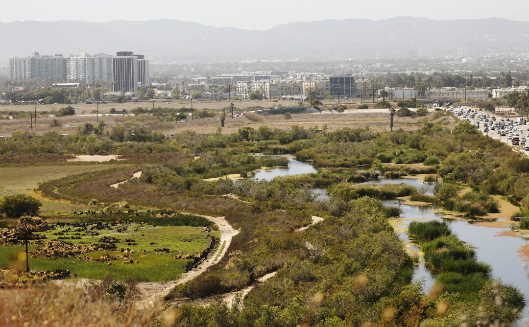 A view of the Ballona freshwater marsh from Bluff Trail Park.