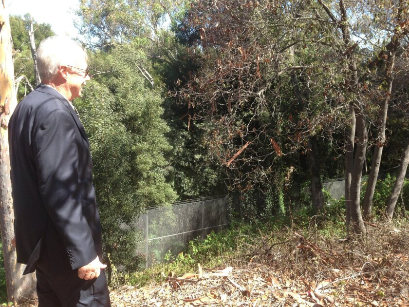 David Rice, the zoo's architecture and planning director, looks over the site of the proposed parking garage, that would be located about 10 feet below Old Globe Way in a canyon.