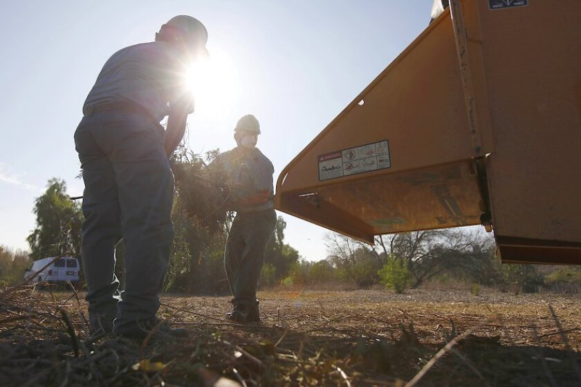 Members of the San Diego Urban Corps chip cut brush and spread the mulch over a reclaimed area in Sweetwater County Park. The state proposes cutting California Conservation Corps; some of its duties will be turned over to Urban Corps.