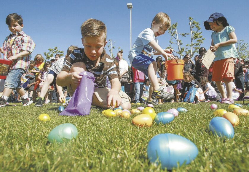 At the sound of a horn, children race to find as many Easter eggs as they can.