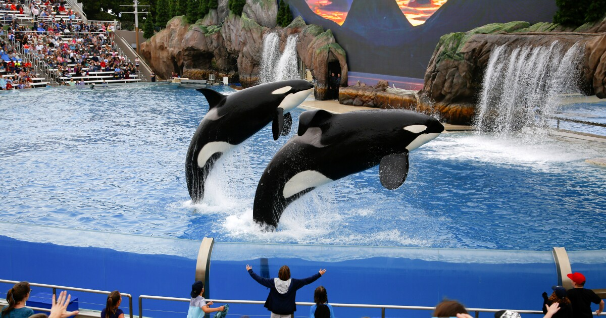 SeaWorld promotes interim CEO to lead company amid signs of improving performance at its parks