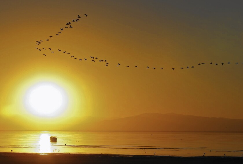 """Birds fly over the shore at Salton Sea State Recreation Area, one of dozens of state parks threatened with closure in 2011 because of budget cuts. A commission assigned to help overhaul management of the parks has called for """"a fundamental transformation"""" of the system."""