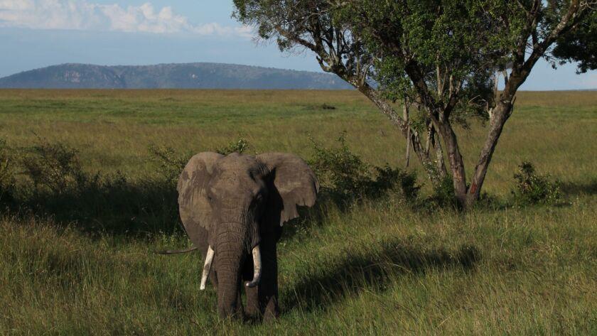 Masai Mara, Kenya, with Corina, April 2012.
