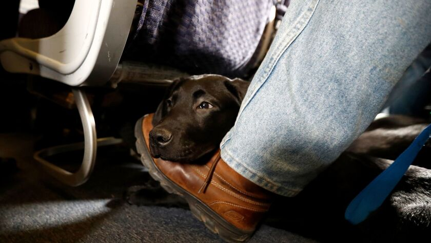 A service dog named Orlando rests on the foot of its trainer, John Reddan, of Warwick, N.Y., while s
