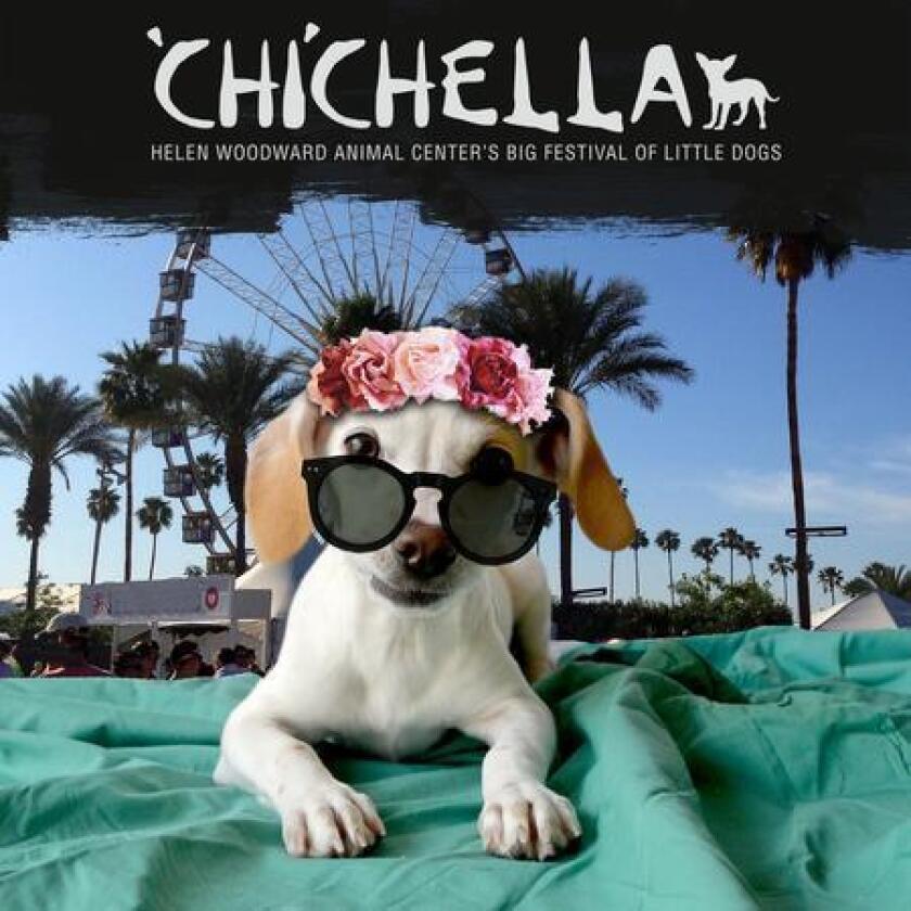 sddsd-chichella-20160819
