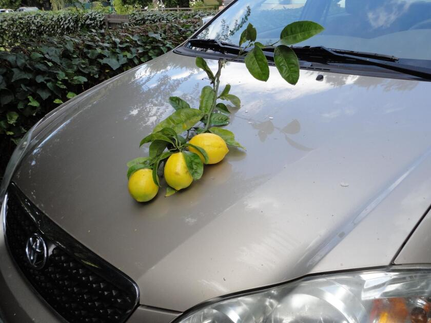 Local car sustains damage after recent storm.