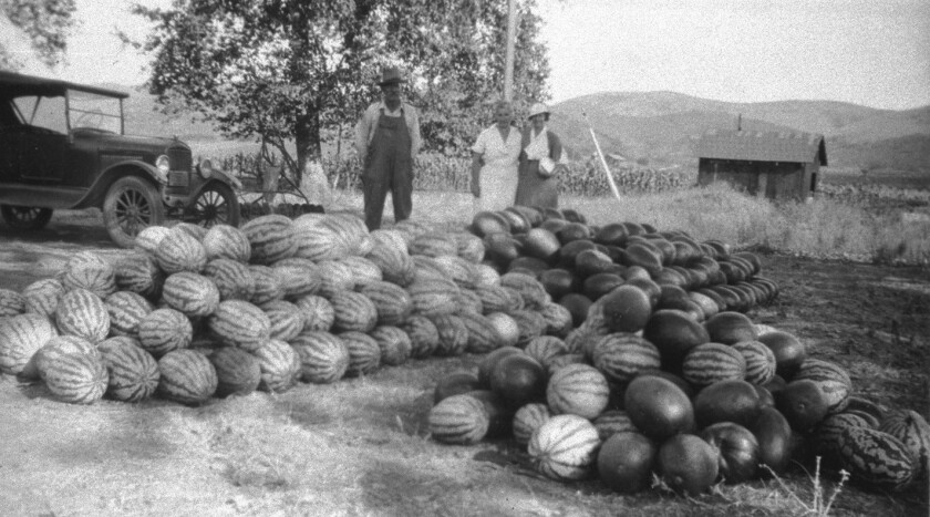 Watermelons on the Archie Flint ranch in 1915. Melons grown in Poway were sold in San Diego then shipped to Los Angeles.