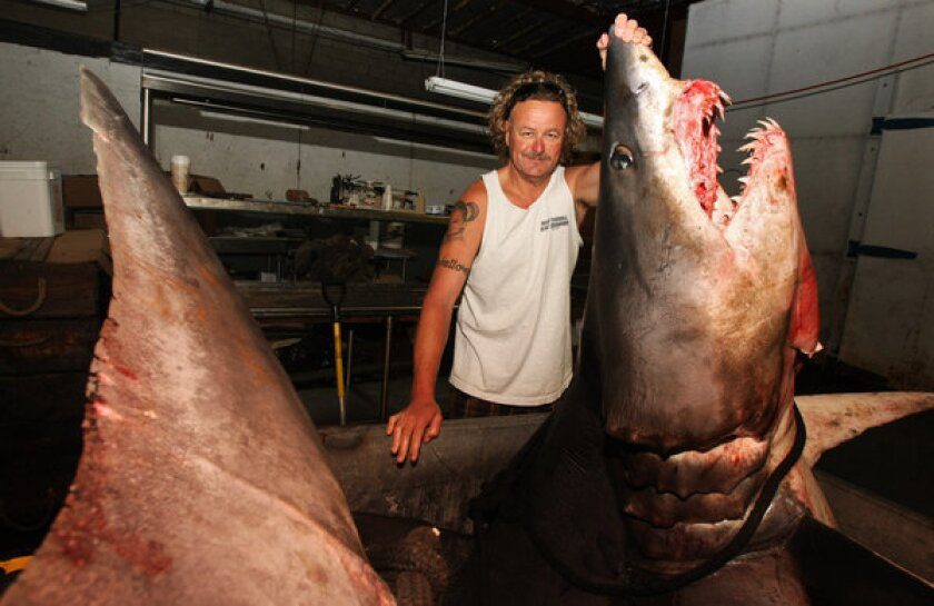 Kent Williams, owner of New Fishall Bait Co., stands next to a 1,323.5-pound Mako shark at the company's headquarters in Gardena.