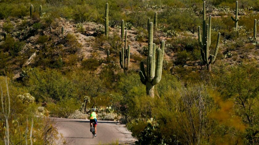 Explore Saguaro National Park in Tucson, Ariz., by day and then return at night for a star-gazing pa