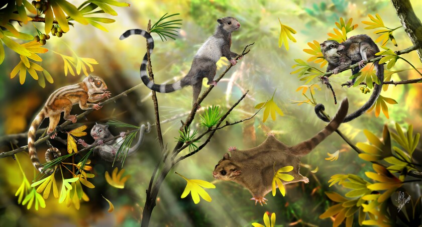 A reconstruction of arboreal mammals in a Jurassic forest. The three animals on the left represent the three new species of mammals. The other two represent two species reported earlier.