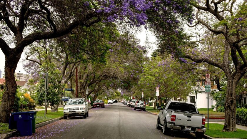 A tree-lined, heavily shaded residential street in Los Angeles' Rancho Park neighborhood.
