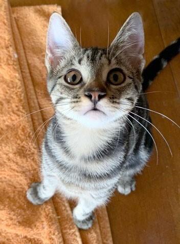 Meet Appy