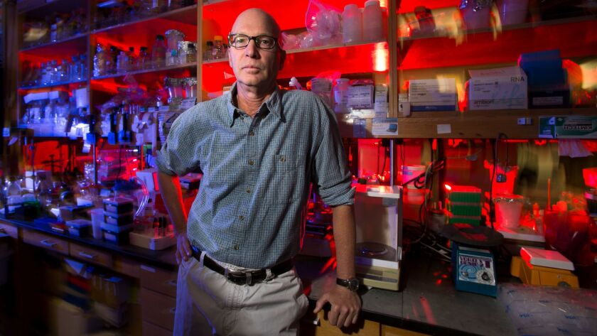 Kim Janda, a researcher at Scripps Research Institute, and his research team are developing a vaccine against the narcotic painkiller fentanyl, which some people have illegally used as a drug to get high. The team has found success so far in testing on mi