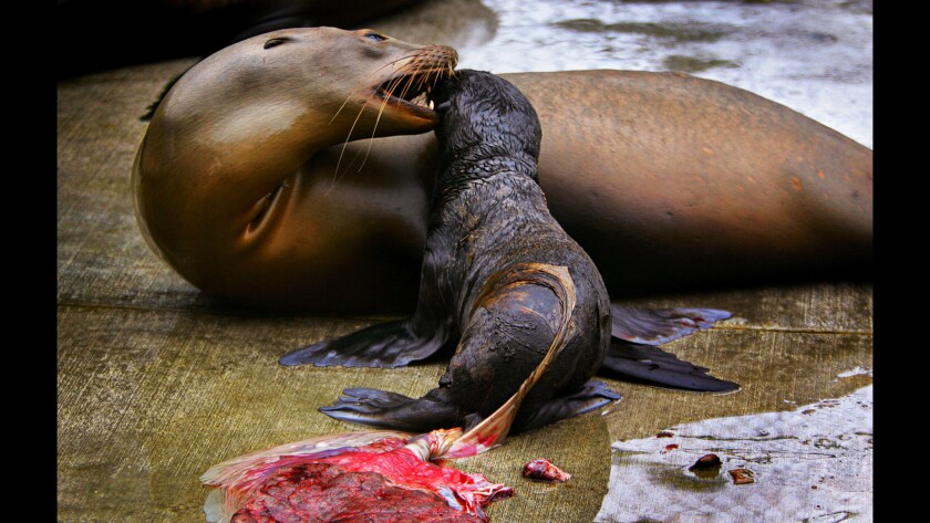 Altered Oceans: Part Four: Plague of Plastic Chokes the Seas