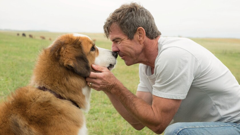 "Dennis Quaid stars as Ethan in ""A Dog's Purpose,"" which opens Jan. 27."